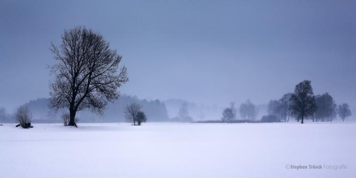 An einem kalten Wintertag im Höchster Ried, Vorarlberger Rheindelta | 16.02.2013 | Foto Stephan Trösch
