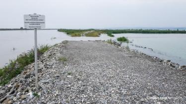 Rechter Rheindamm bei Km 93.9 | Die Furt ist vom hohen Wasserstand überschwemmt und nicht passierbar | 31.07.2014 | Foto Stephan Trösch