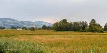 Fussacher Ried, Rheindelta Vorarlberg | Blick in südwestliche Richtung über die Radiostation am linken Bildrand zu den Anhöhen auf schweizer Seite | 22.07.2015 | Foto Stephan Trösch