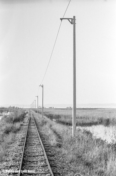 Hard, Rechter Rheindamm auf Höhe Schleienloch | Aufnahme 10.06.1966 | Foto bereitgestellt von Bruno und Lotti Keist