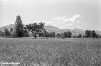 Blick RichtungSüdwesten auf den Bergrücken bei Walzenhausen | Aufnahme 12.06.1966 | Foto bereitgestellt von Bruno und Lotti Keist
