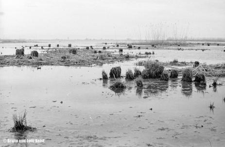 Fussach | Aufnahme 09.04.1967 | Foto bereitgestellt von Bruno und Lotti Keist