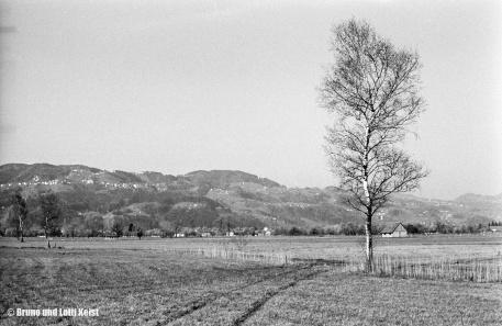 Streuwiese zwischen Fussach und Höchst in Ortsnähe. Blick Richtung SW auf die Anhöhe mit Walzenhausen | Aufnahme 19.04.1967 | Foto bereitgestellt von Bruno und Lotti Keist
