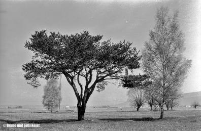 Blick vom südlichen Fussacher Ried Richtung Pumpwerk Fussach | Aufnahme 19.04.1967 | Foto bereitgestellt von Bruno und Lotti Keist