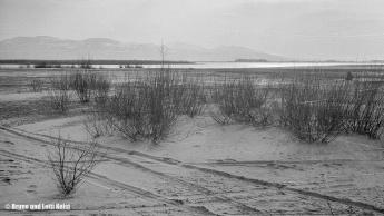 Sanddelta | Blick über die Fussacher Bucht in südwestliche Richtung mit den Anhöhen bei Walzenhausen im Hintergrund | 11.04.1968 | Foto bereitgestellt von Lotti und Bruno Keist