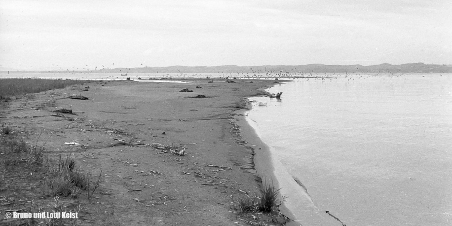 Sanddelta - Mündungsbereich Alpenrhein | 22.08.1969 | Foto bereitgestellt von Lotti und Bruno Keist