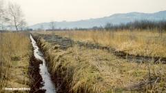 Graben zur Entwässerung des Riedes | Höchster Ried, Flottern-Heldern | 11.04.1983 | Foto bereitgestellt von Bruno und Lotti Keist