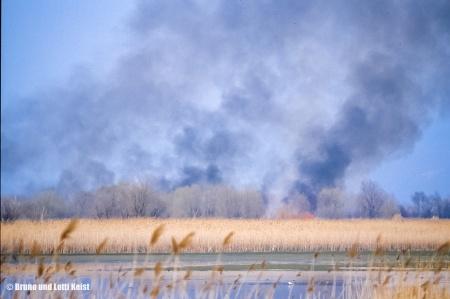 Schilfbrand in der inneren Fussacher Bucht | 17.04.1987 | Foto bereitgestellt von Bruno und Lotti Keist
